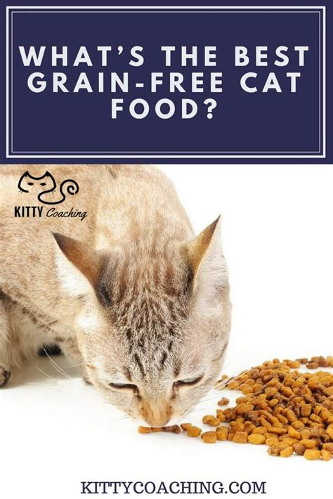 what s the best grain free cat food 2018