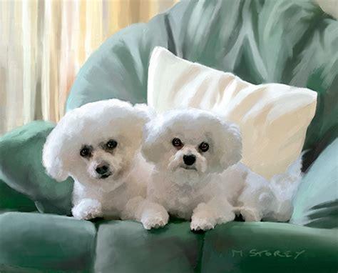 bijon puppy pictures of bijon dogs breeds picture