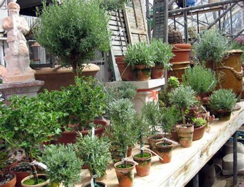 herb topiaries tropical topiaries garden topiary