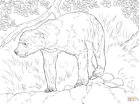 sun bear coloring pages realistic sun bear coloring page free printable coloring