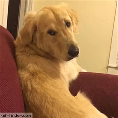 gif puppy gif find on giphy