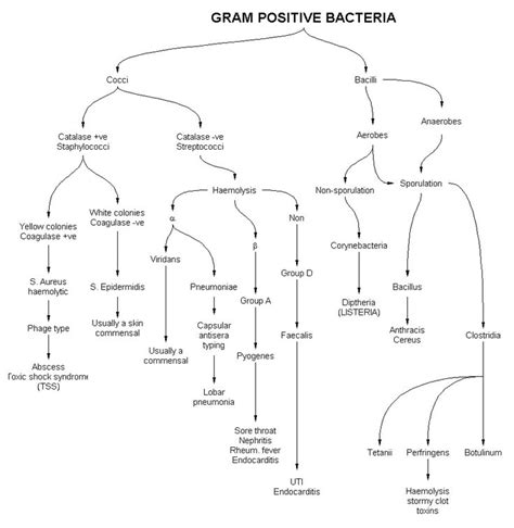 gram positive bacteria flowchart 1000 images about microbiology flow charts on