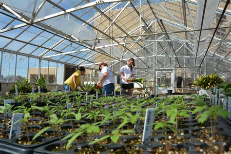 Texas A&M Horticulture Club plans 32nd annual plant sale