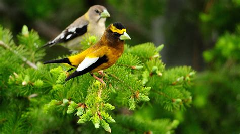 wallpaper with birds animals 1920x1080 full hd wallpapers 1080p wallpapers