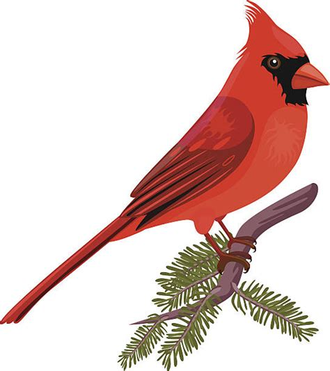 cardinal clip clipart cardinal danielbentley me