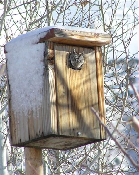 owl boxes feature story owl box