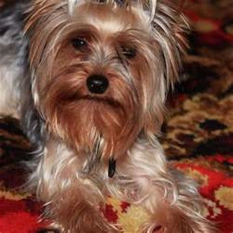 lost dogs near me lost dogs found dogs adopt rehome wanted dogs ireland pet pics free ads