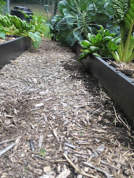wood chip mulch vegetable garden using wood chips in a vegetable garden
