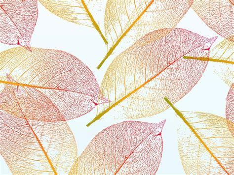 imagenes jpg transparentes outono transparentes folhas bonitas cair vector baixar