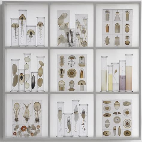 the cabinet of curiosities in the blink of an eye steffen dam s cabinet of curiosities i ve got some stuck in