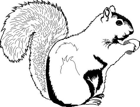 printable chipmunk targets 137 best images about animal coloring book on pinterest
