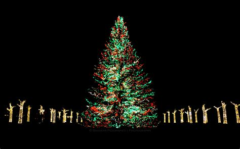 chicago botanic garden christmas lights christmas lights at chicago botanic garden widescreen