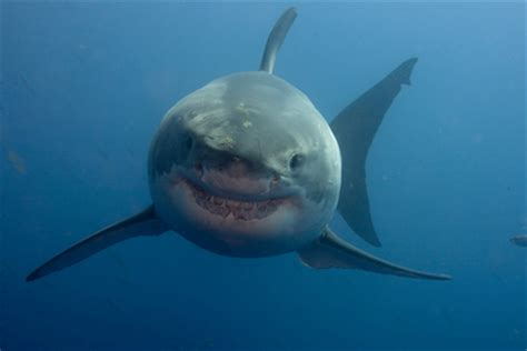 baby shark eyes 45 astonishing facts about eyes information loaded by hnbt
