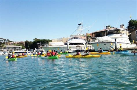 adventures boat rentals newport beach ca paddle boards in the back bay picture of southwind kayak