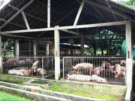 Backyard Piggery Business by Mango Hog Farm Cebu Philippines
