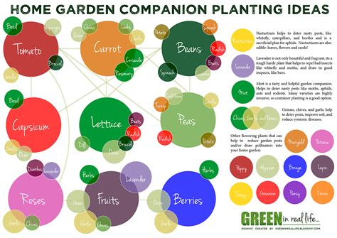 Companion Plants Vegetable Garden Green In Real Ideas For The Home Garden Companion