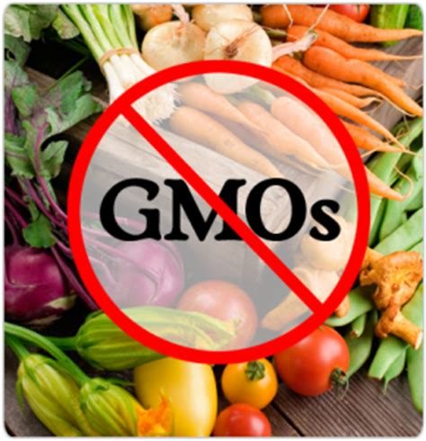 are gmos bad for your health if you re asking this question you re probably missing the point always learning are gmo s bad for you