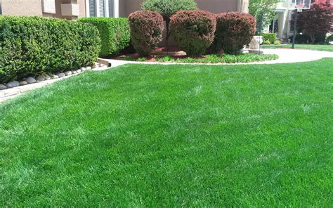 photo gallery pro turf lawn service