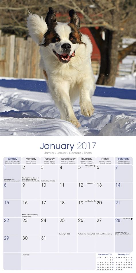 Barnard Calendar St Bernard Calendar 2017 10075 17 St Bernard Breeds