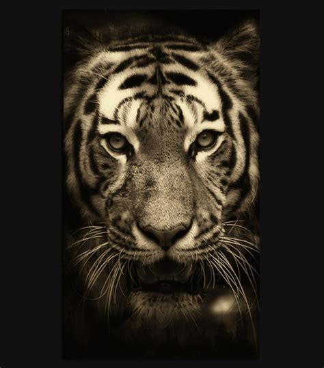 wallpaper iphone tiger tiger hd wallpaper for your iphone 6 spliffmobile