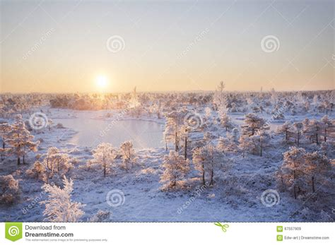 frosty forest royalty free stock frozen plants grown with crystals royalty free stock