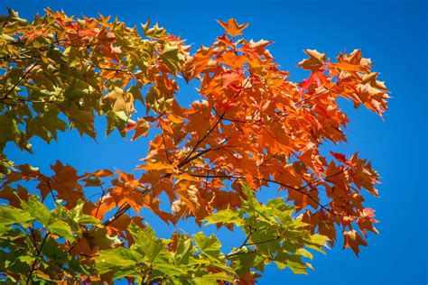 what causes leaves to change color in the fall fall foliage 2012 when will leaves start to change color
