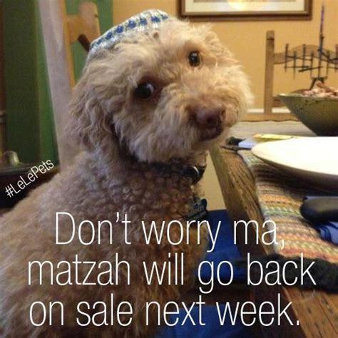 Passover Meme - happy passover dog www imgkid com the image kid has it