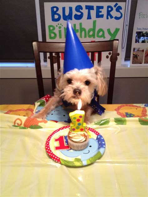 dogs birthday 25 best ideas about happy birthday on happy birthday animals
