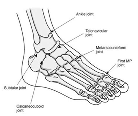 foot diagram foot diagram unmasa dalha