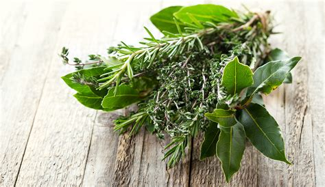 le erbe aromatiche in cucina erbe aromatiche mon amour la madia travelfood