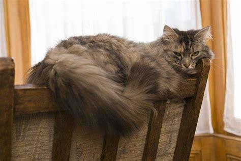gatto in appartamento come cambia la cura di un gatto d appartamento