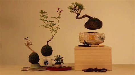 air bonsai levitating magnetic bonsai trees  hoshinchu