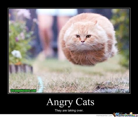 Annoyed Cat Meme - angry cats by igotobecrazy meme center