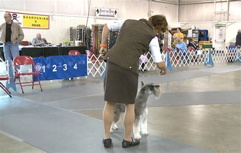 akc show show brings chance for national titles to hub city wbbj tv
