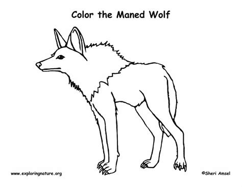 wolf coloring pages pdf wolf maned coloring page