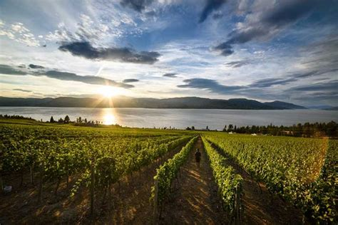 kelowna wineries   wineries  kelowna british