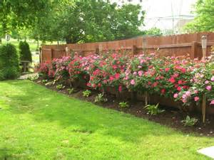 Flower Bed Fencing Dog - cottage garden design with roses wilson rose garden