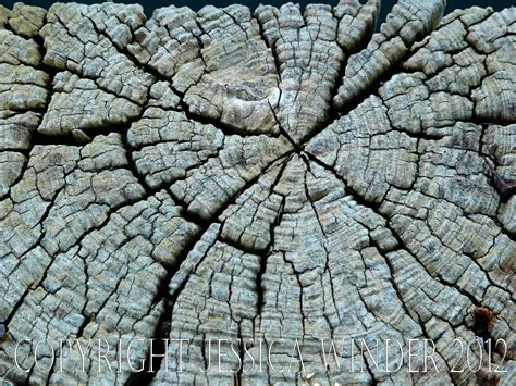 pattern from nature nature close up photographic salmagundi page 7