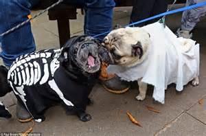 pug skeleton packs of dogs become four legged frankensteins bats and skeletons for