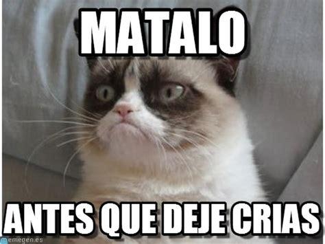 imagenes mas vulgares y chistosas imagenes y memes graciosos de gatos para whatsapp fondos