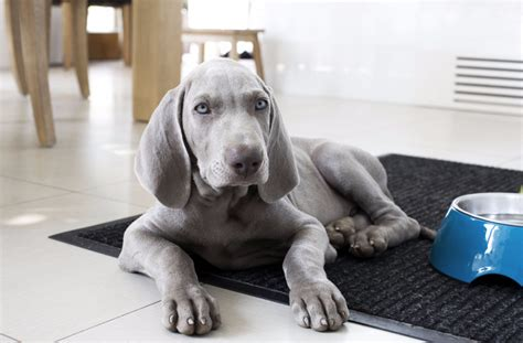 when are dogs no longer puppies 9 signs your puppy is no longer a puppy news at