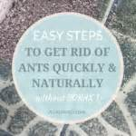 Get Rid Of Ants In Room by 10 Things To Consider When Packing For A Big Move A
