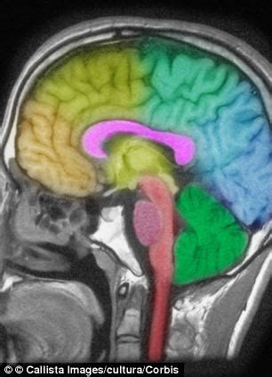 Detox Brain Damage by A Lack Of Sleep Damages The Brain In A Similar Way To