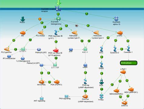 g protein pathway g protein signaling g protein beta gamma signaling
