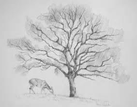 tree sketch 2 by cruciocurse on deviantart