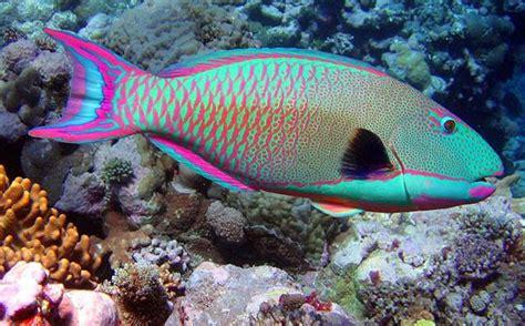 fish seaanimals aneka ikan laut oceanworld tropical fish