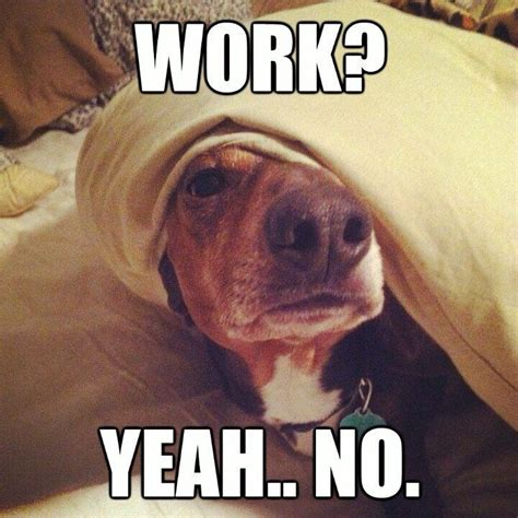 Yeah No Meme - work yeah no dogs pinterest