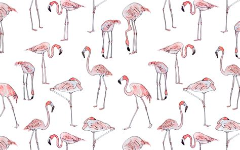 flamingo wallpaper sydney free wallpaper download shillington design blog