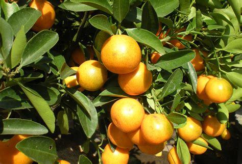 citrus柑橘味香气吧名称相关 柑