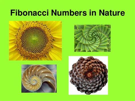 numerical pattern in nature 541 interactive ppt fibonacci sequence